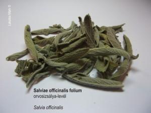 Salviae folium
