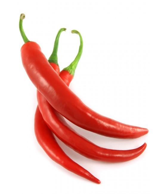 hot pepper-550x650