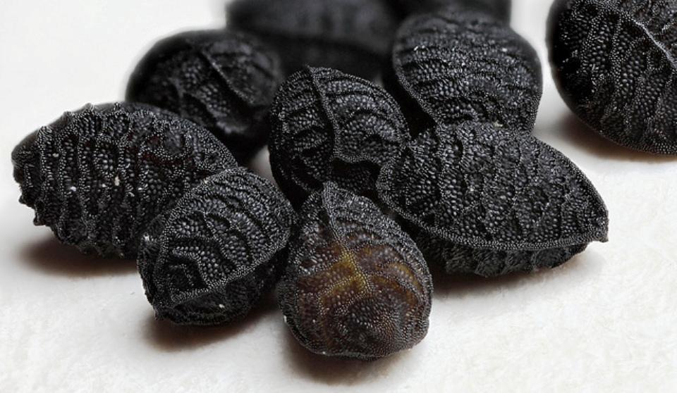 nigella-sativa-seed-magnified-640x372222