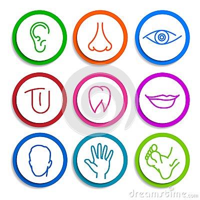 set-icons-human-body-parts-colored-flat-ear-nose-eyes-tongue-teeth-mouth-lips-head-arm-leg-foot-43718478