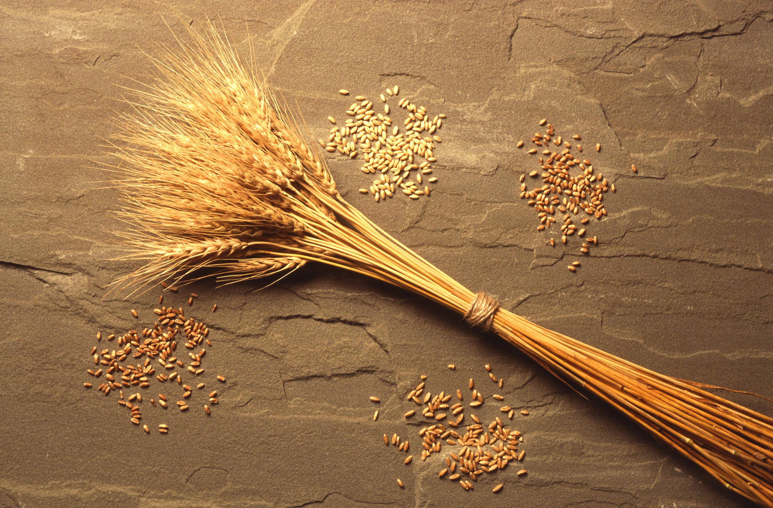 94599317wheat